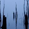 Foggy Relection, Manasquan Reservoir, Howell, NJ