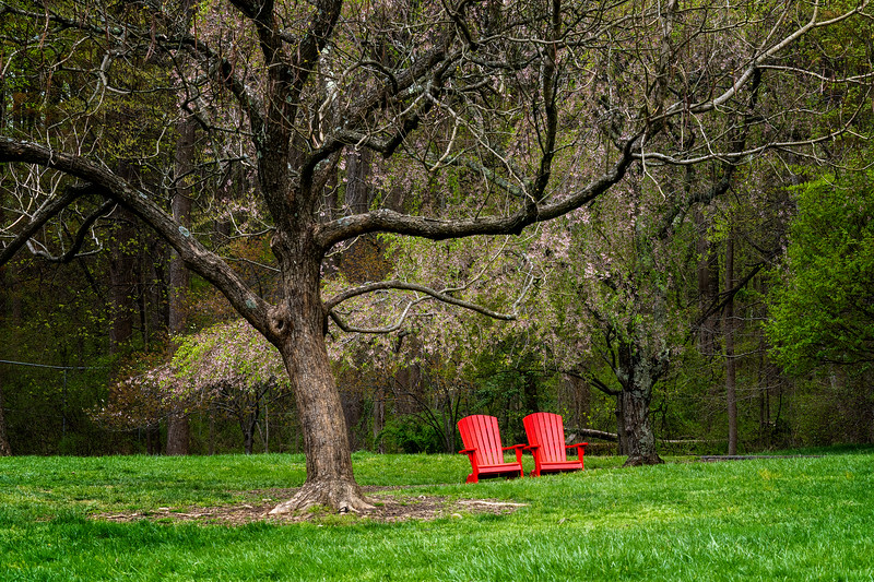 Two bright red deck chair on the lawn under the Spring trees