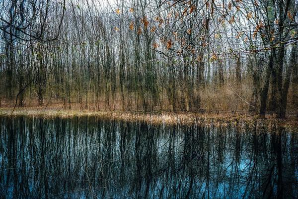 Along The Pond