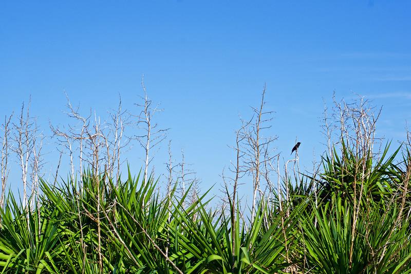 Lone black bird on a branch.