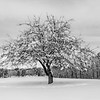 Snowy Scene 3/22/18
