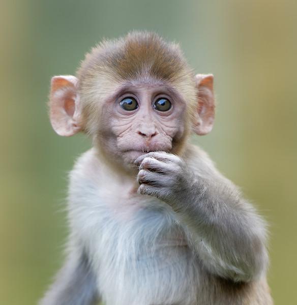 Galtaji Monkey Temple, Jaipur, India