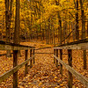 An Autumn Walkway 10/22/20