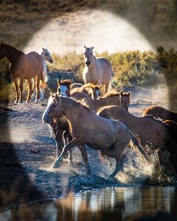 Wild Hearts - Gathering