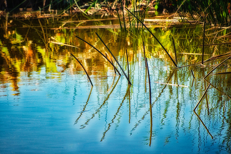 "ETC-3277  ""Marsh Reflection"""