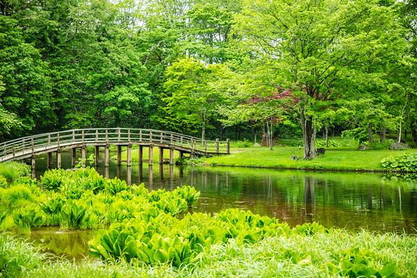 Serenity in Green