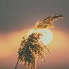 Frühlingsabend • von der untergehenden Sonne geküsst