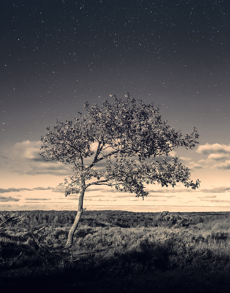Starstruck in the moonlight