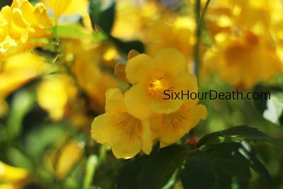 Shady Flower