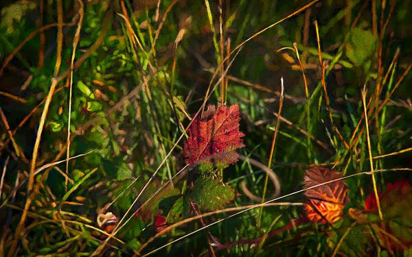 Leaf isolation
