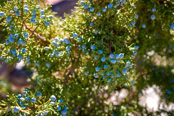 Berries - Utah