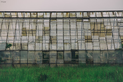 an old greenhouse