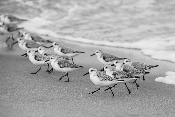 Birds 9215 bw