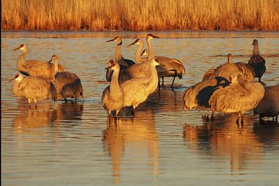 Bosque Cranes