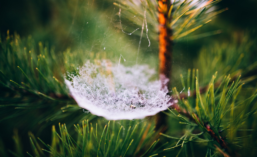 tangled webs we weave
