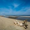 Tree on Beach at Sandy Hook, NJ