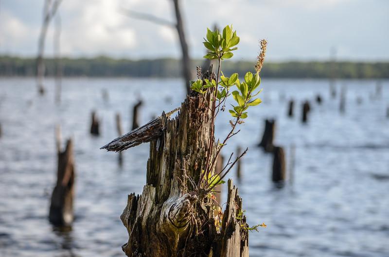 New Growth, Manasquan Reservoir, Howell, NJ