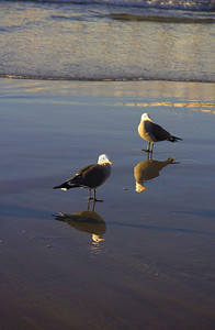 Birds At The Shore