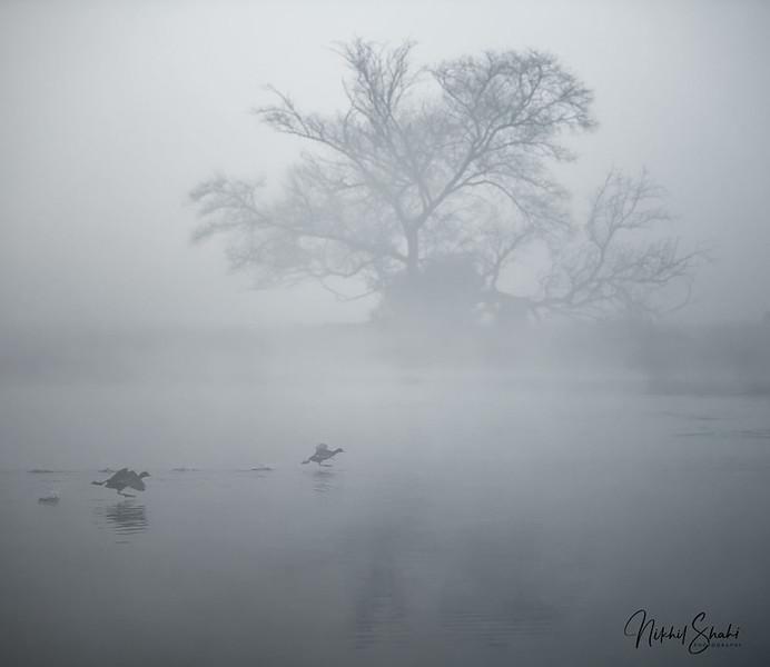 A Beautiful Foggy Morning at Keoladeo National Park, Rajasthan, India