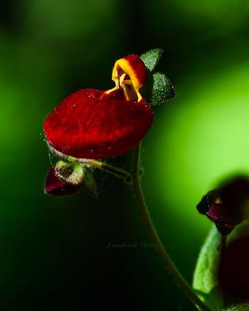 Purse Pocket Flower