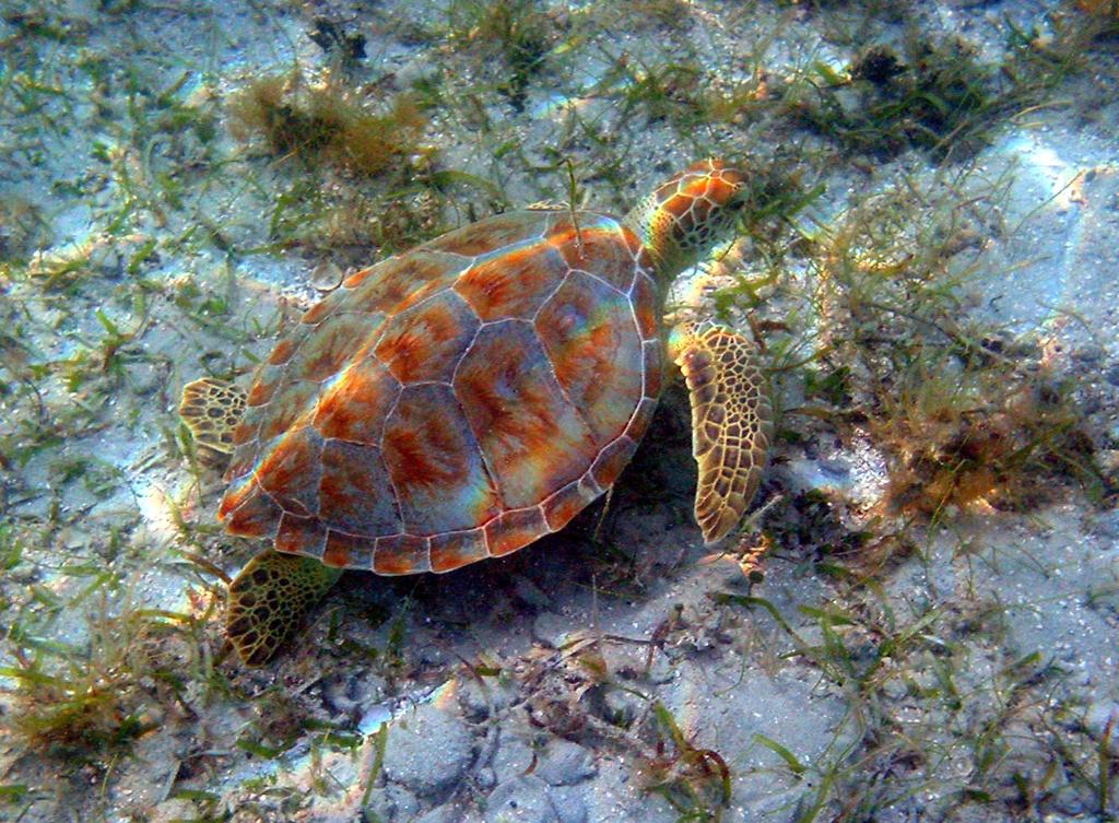 turtle_frame