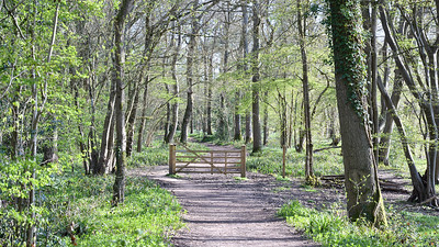 Path in the Woods at Slinfold