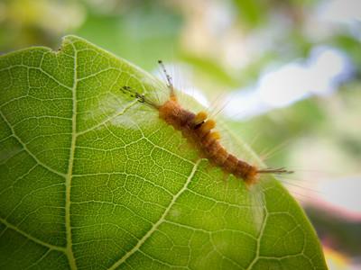 |Caterpillar|