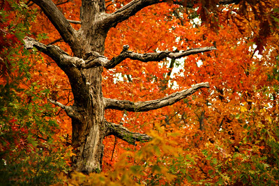 Fall colors in Missouri.  Photo by Kyle Spradley | www.kspradleyphoto.com