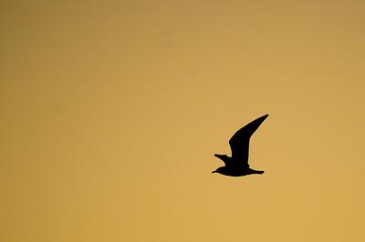 Silent Flight, Sleeping Dawn