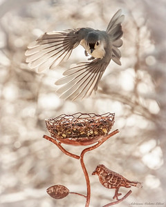Tufted Titmouse Flying
