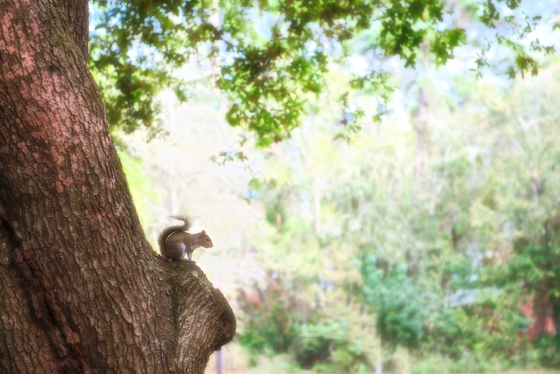 "ETC-3061  ""A Squirrel's World"""