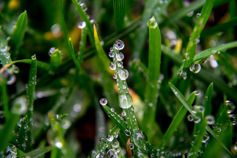 Morning Dew on Grass Blades