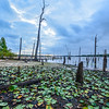 Lilly Pads, Manasquan Reservoir, Howell, NJ
