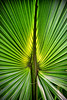 "ETC-3172  ""Backlit Palm Frond"""