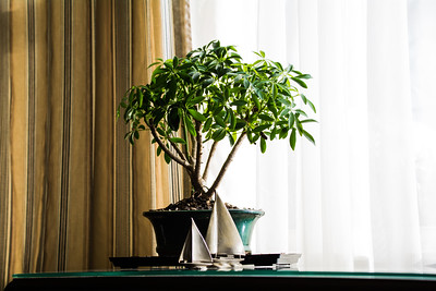 Bonsai with pewter sailboats.