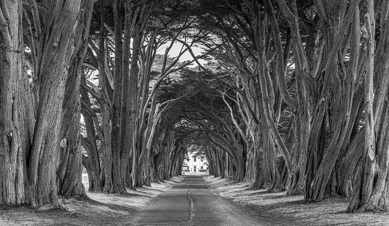 A Cypress Tree Tunnel 11/7/19