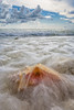 Surf Shell Wave