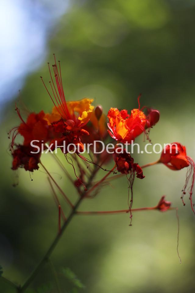 Jelly Flower