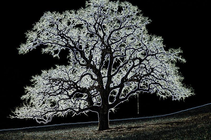 Electric Tree.