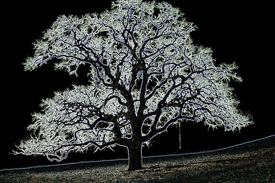 Electric Tree.