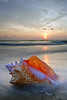 Conch Shell Sunset