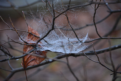 Morning dew on a web