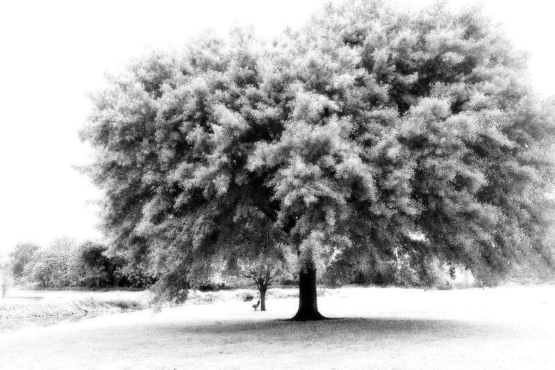 """ETC-3096  """"'Winter' in Florida"""""""
