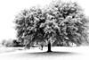"""Winter"" in Florida"
