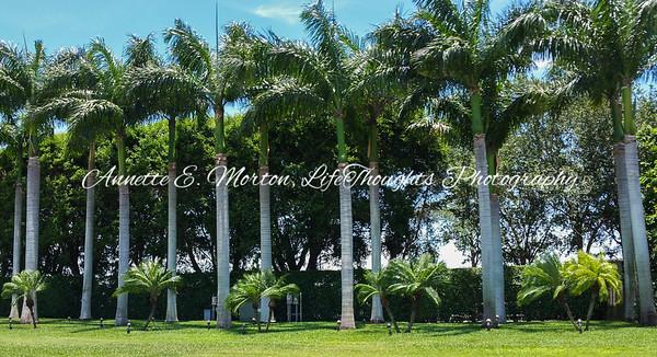 """Florida Palms"" Boca Raton FL"