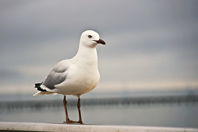 Seagull on Pole