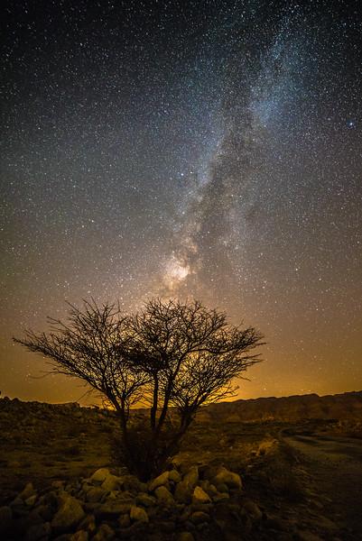 Amazing desert