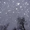 Snowstorm 3/15/17