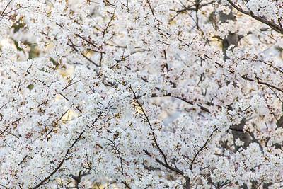 Tidal Basin || Washington, D.C., USA  Canon EOS 6D w/ 150-600mm F5-6.3 DG OS HSM | Sports 014: 600mm @ ¹⁄₄₀₀ sec, f/7.1, ISO 1600