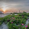 Sunrise Flowers 5/26/16